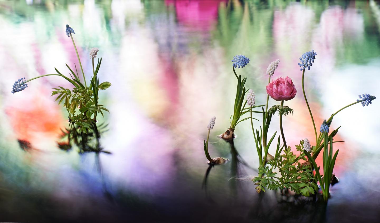 """ヴァン クリーフ&アーペル 期間限定エキシビション""""LIGHT OF FLOWERS ハナの光""""を開催(1)―Van Cleef & Arpels(ヴァン クリーフ&アーペル)"""